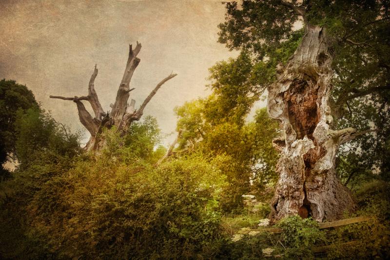 Chalice Hill, Glastonbury, Somerset, England - short horror stories